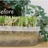 節約食べられるグリーンインテリア その後
