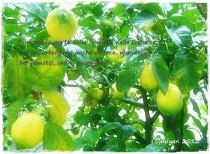 シチリアのレモンの樹