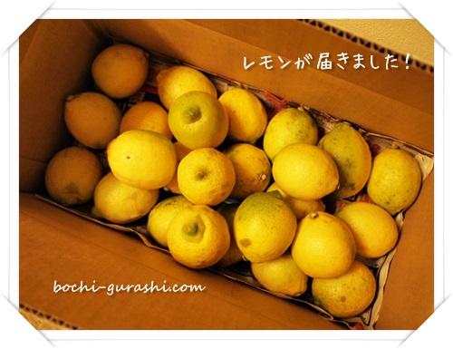 国産レモン取り寄せ