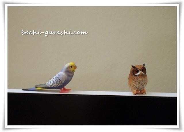 ガチャポン鳥
