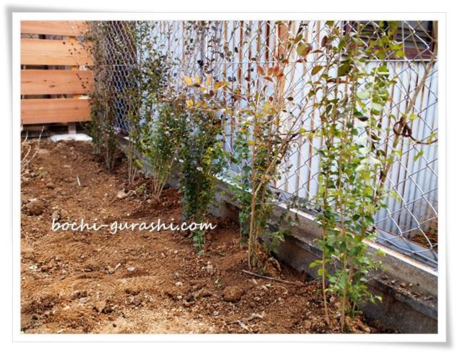 プリペット生垣を植える