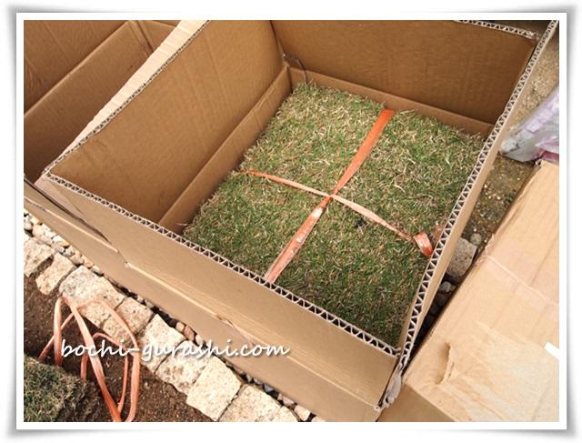 TM9芝生が届く