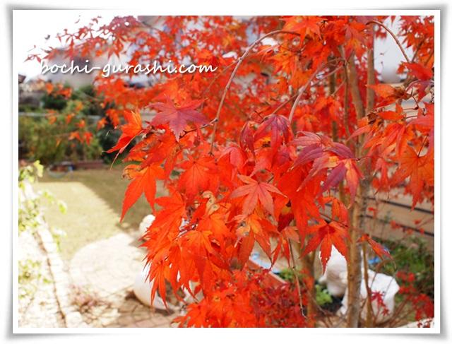 庭の紅葉アップ