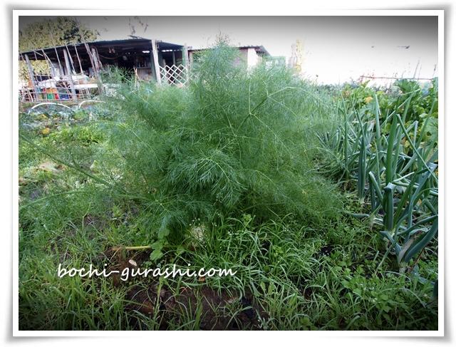 プロチーダの家庭菜園
