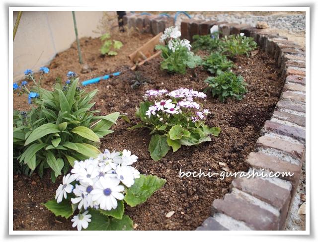 レンガ花壇に花を植える