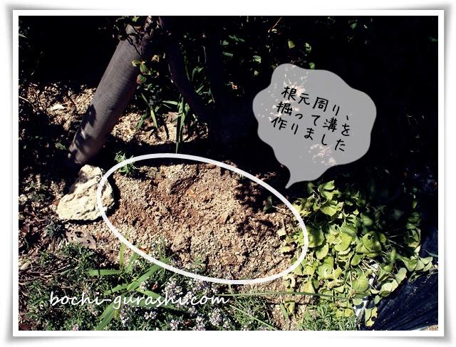 木の根元を掘って水を貯める