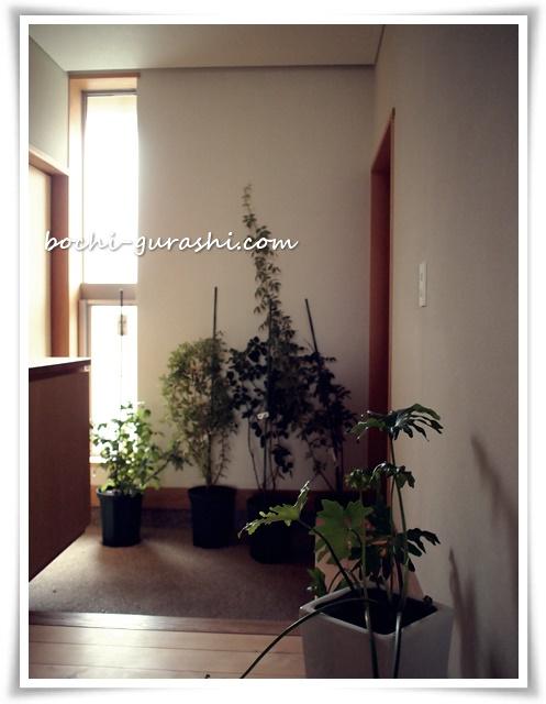 台風で植物を家に入れる