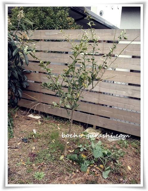 柚子の木3年目