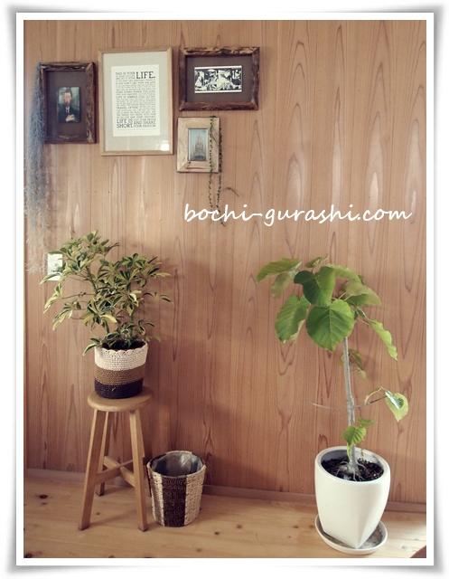 冬の前に観葉植物を家の中に