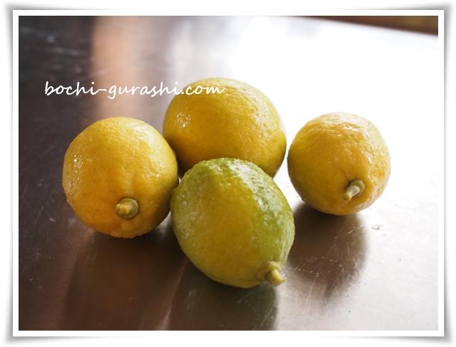 庭のレモンを収穫