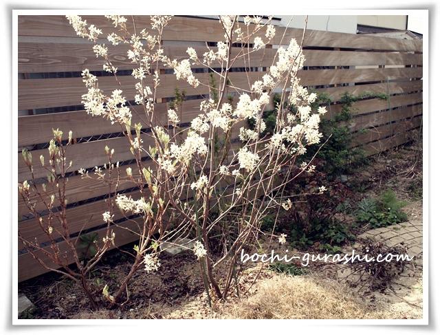 2018ジューンベリーの花