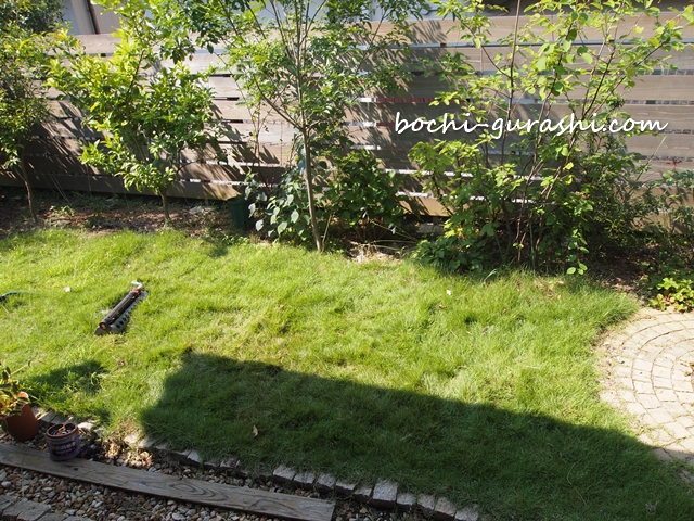 伸びた芝生
