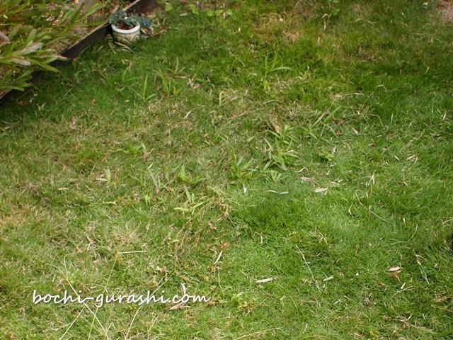 芝生に雑草