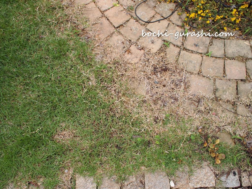 芝生の侵食