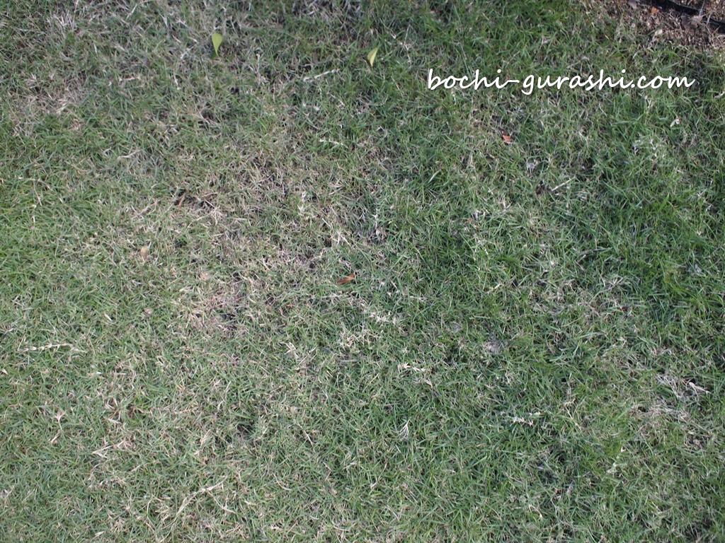 芝生がまだら