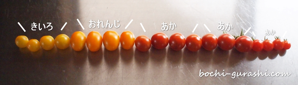カラフルトマトの収穫201907